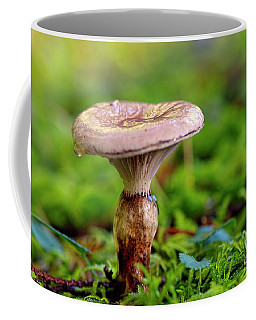 Coffee Mug featuring the photograph Fungus  by Sharon Talson