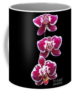 Coffee Mug featuring the photograph Fuschia Orchid Triplets by Sue Melvin