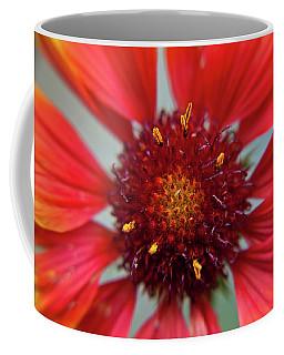 Coffee Mug featuring the photograph Gaillardia by Brenda Jacobs