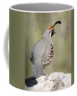 Gambel's Quail Coffee Mug