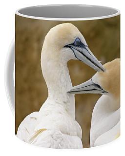 Gannet Pair 1 Coffee Mug