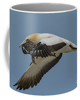 Coffee Mug featuring the photograph Gannets 1 by Werner Padarin