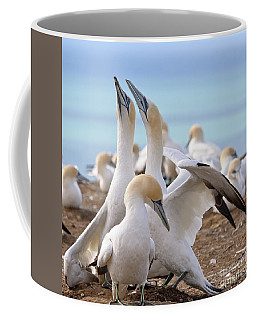 Gannets Coffee Mug