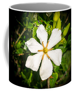 Gardenia In The Morning Sun Coffee Mug
