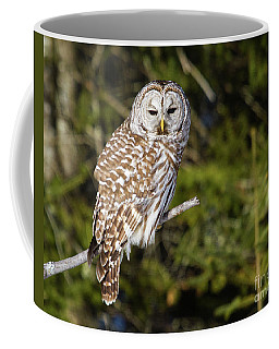 Gazing Barred Owl Coffee Mug