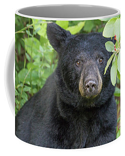 Gazing Black Bear Coffee Mug