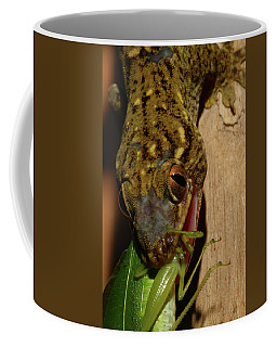 Gecko Feed Coffee Mug