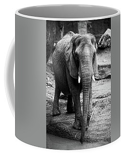 Coffee Mug featuring the photograph Gentle One by Karol Livote