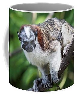 Geoffroy's Tamarin Saguinus Geoffroyi Coffee Mug