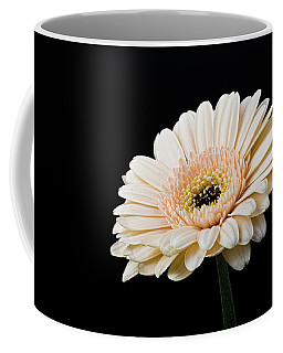 Coffee Mug featuring the photograph Gerbera Daisy On Black II by Clare Bambers