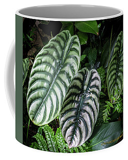 Coffee Mug featuring the photograph Giant Calladium Leaves by Richard Goldman