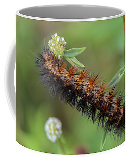 Giant Leopard Moth Caterpillar Coffee Mug by Christopher L Thomley