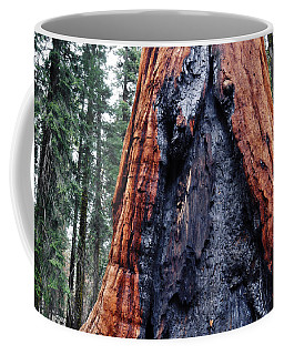 Coffee Mug featuring the photograph Giant Sequoia by Kyle Hanson