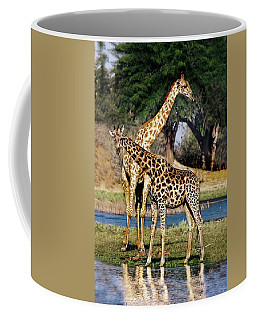 Giraffe Mother And Calf Coffee Mug