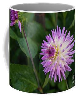 Glenbank Twinkle Dahlia 3 Coffee Mug