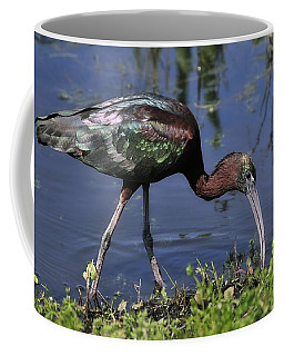 Glossy Ibis In Pond Coffee Mug