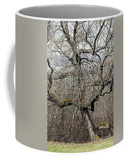 Gnarly Tree Coffee Mug