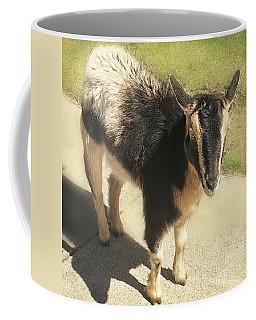 Coffee Mug featuring the photograph Goat by Heather Applegate