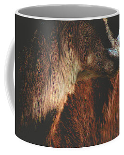 Coffee Mug featuring the photograph Goat Love by Viviana  Nadowski