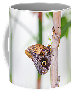Coffee Mug featuring the photograph Gold And Brown Butterfly by Raphael Lopez