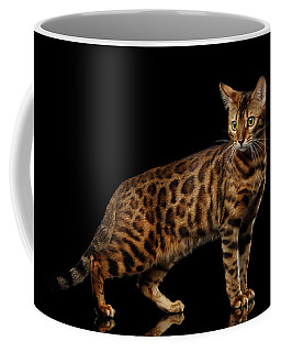 Coffee Mug featuring the photograph Gold Bengal Cat On Isolated Black Background by Sergey Taran