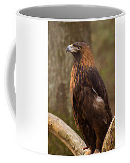 Coffee Mug featuring the photograph Golden Eagle Resting On A Branch by Chris Flees