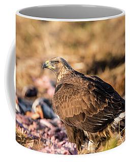 Golden Eagle's Back Coffee Mug by Torbjorn Swenelius