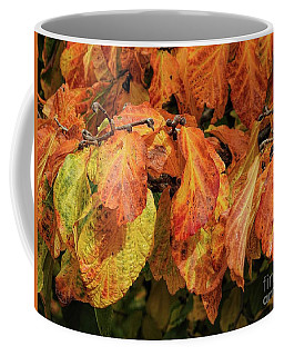 Coffee Mug featuring the photograph Golden by Peggy Hughes