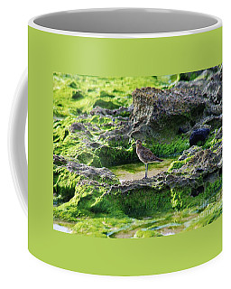 Golden Plover At The Beach Coffee Mug by Craig Wood