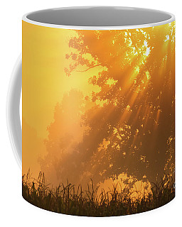 Coffee Mug featuring the photograph Golden Sunlight Blessings by Rachel Cohen