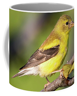 Goldfinch In The Early Morning  Coffee Mug