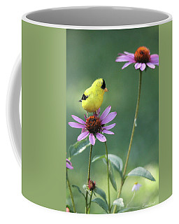 Goldfinch On A Coneflower Coffee Mug