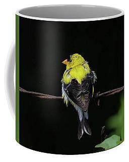 Goldfinch Coffee Mug by Ronda Ryan