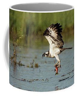 Sea Hawk  Coffee Mug