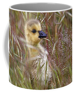 Gosling In The Meadow Coffee Mug