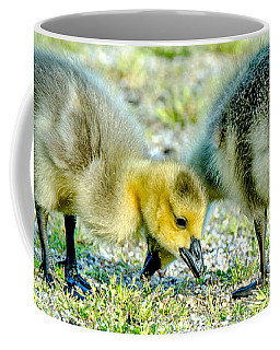 Coffee Mug featuring the photograph Goslings Snacking by Steven Santamour