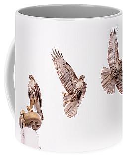 Graceful Hawk Liftoff Coffee Mug