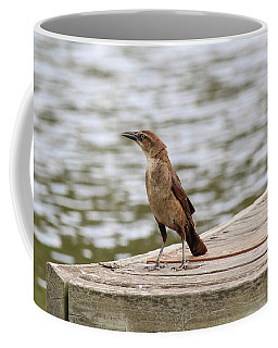 Coffee Mug featuring the photograph Grackle On A Dock by Alison Frank