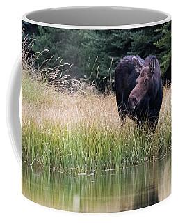 Grand Teton Moose Coffee Mug