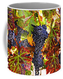 Grapes On Vine In Vineyards Coffee Mug