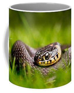 Grass Snake - Natrix Natrix Coffee Mug