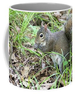 Gray Squirrel Eating Coffee Mug