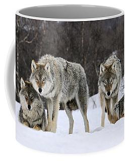 Gray Wolves Norway Coffee Mug