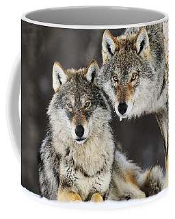 Coffee Mug featuring the photograph Gray Wolf Canis Lupus Pair In The Snow by Jasper Doest