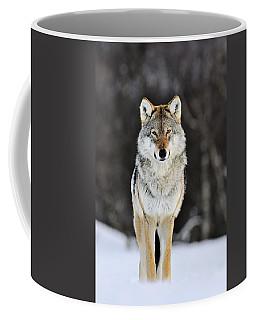 Gray Wolf In The Snow Coffee Mug