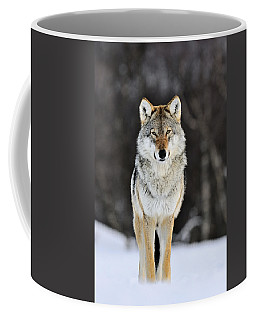 Gray Wolf In The Snow Coffee Mug