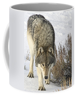 Gray Wolf Coffee Mug