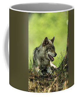 Gray Wolf In Shade Coffee Mug