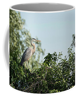 Coffee Mug featuring the photograph Great Blue Heron  2015-18 by Thomas Young