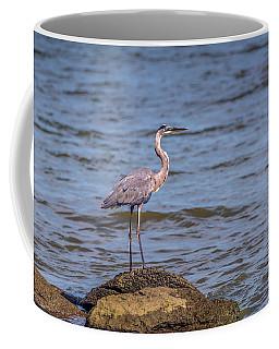 Great Blue Heron Gaze Coffee Mug